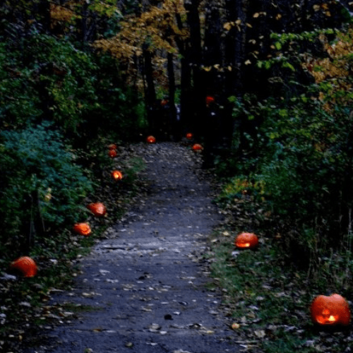 MLTNS Fairy Tale Forest - Carved pumpkins line a forest trail
